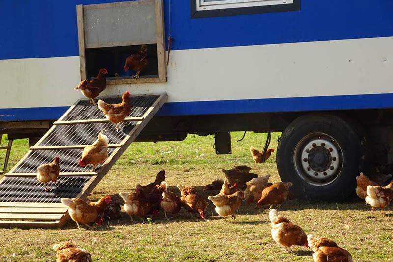Am Hühnerlaufsteg ist immer was los.