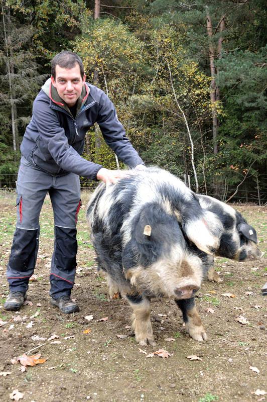 Bauer Franz mit seinem reinrassigem Turopolje Freilandschwein