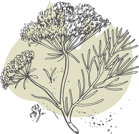 EVE-Fennel-Illos+Shape.png