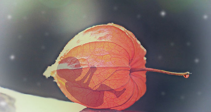 01.baby.leaf.jpg