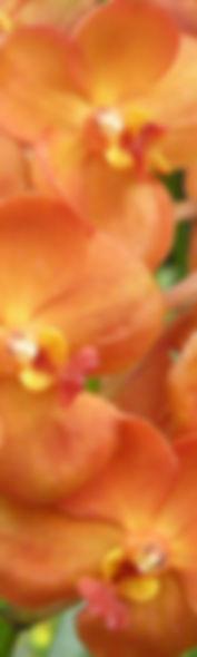 Tall-orange.jpg