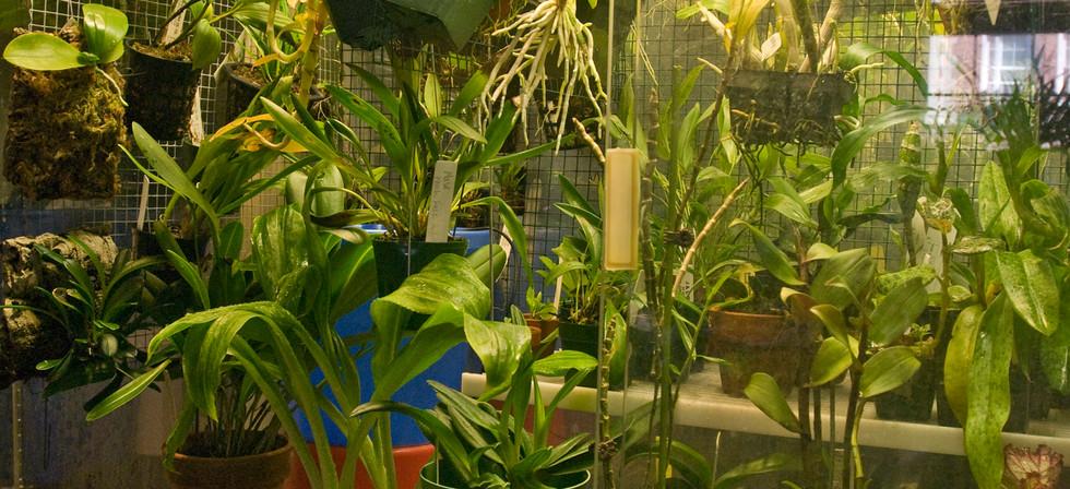 Orchidarium 2.jpg
