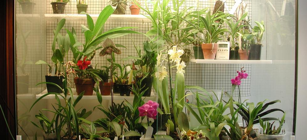 Orchidarium 1.JPG