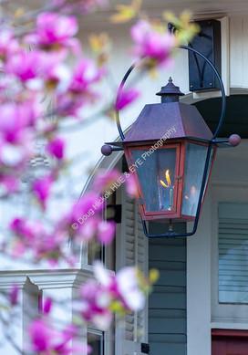 2002 Lantern Magnolia Flowers