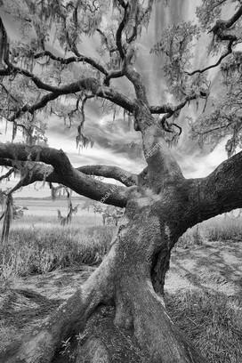 2005 Botany Bay Trees 10