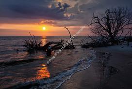 1907-02 Boneyard Sunrise 15-2