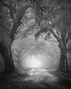 1812 Dixie Plantation Road 02-3-3