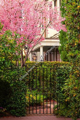1903 Alleyway Garden 02