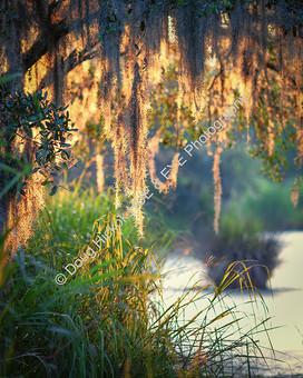 1806 Marsh Sunrise 05
