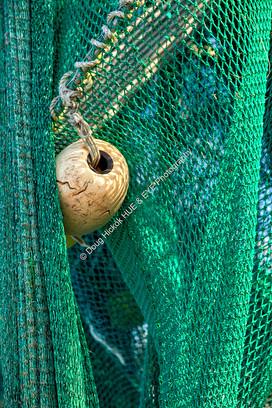 1212 Green Net