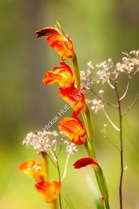 2005 Botany Bay Flower 01