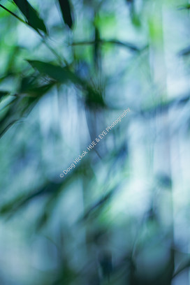 2001 Middleton Soft Bamboo
