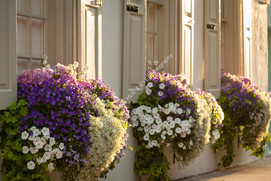 10 Flower Boxes 1