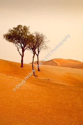 2013 UAE 60.jpg