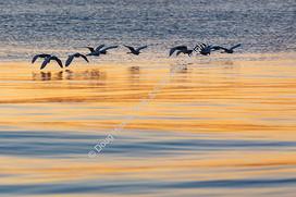 2002 Ashley River Egret Flock