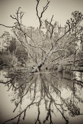Johns Island Marsh Tree