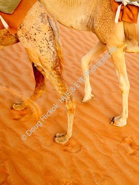 2013 UAE 58.jpg