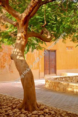 2013 UAE 50.jpg