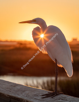 2011 Shem Creek Egret Sunset 02-2.jpg