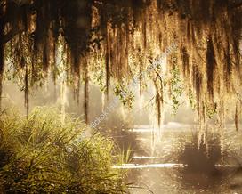 1907 WA Swamp 22