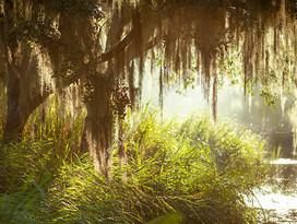 1907 WA Swamp 2
