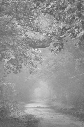 2006 WA Park Forest 08-2