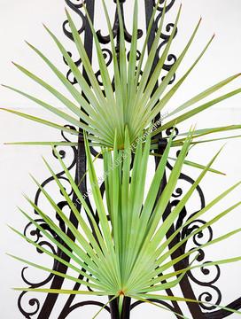 1911 Iromwork Palm Fronds 1