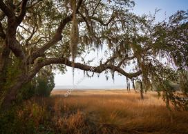 1902 Ashley River Marsh