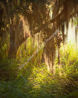 1907 WA Swamp 1-2