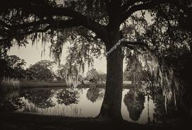 1411 Magnolia Lake
