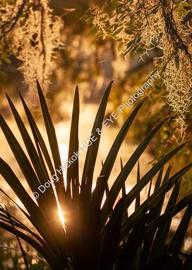 2004-06 WA Park Sunrise 09