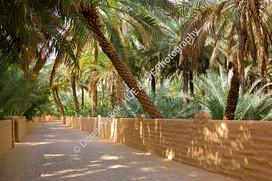2013 UAE 207.jpg
