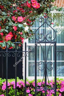1903 Camellia Fence