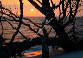 1907-02 Boneyard Sunrise 5