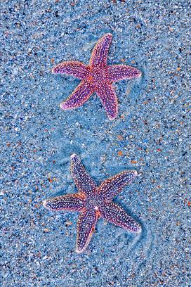 1101 Star Fish 3