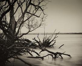 1907-02 Boneyard Beach 1