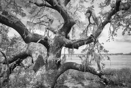 2005 Botany Bay Trees 03