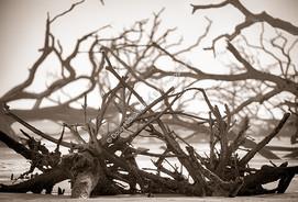 2003 Botany Bay Trees 03