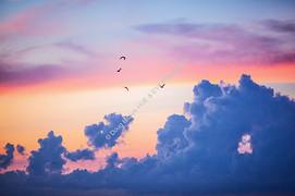 1907 Harbor Dawn Clouds 5