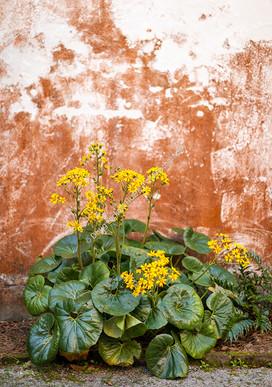 2001 Yellow Flowers