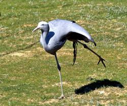 etienne-Parc oiseaux-05-18 132