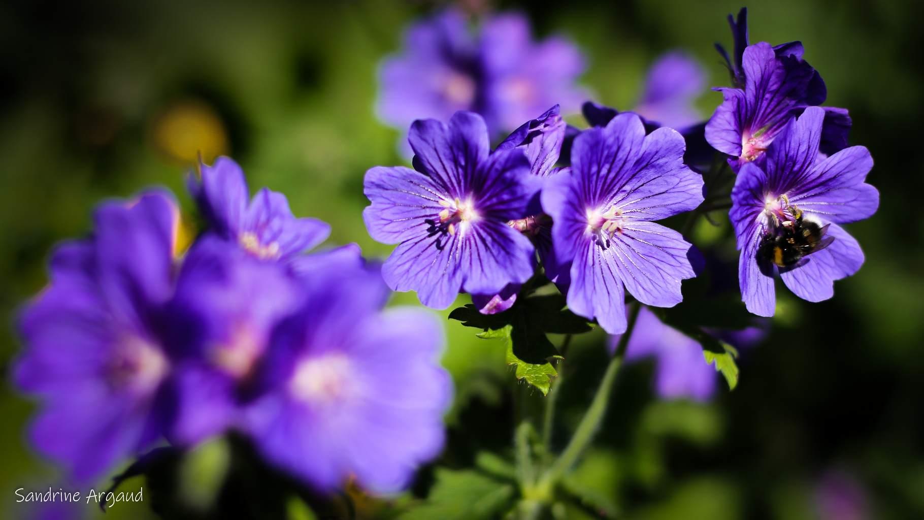 SA_IMG_1692_Violet