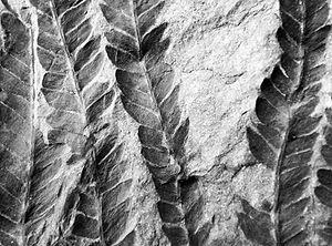 Sandrine Texture_.jpg