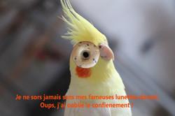 ET - lunette - IMG_3394 v1