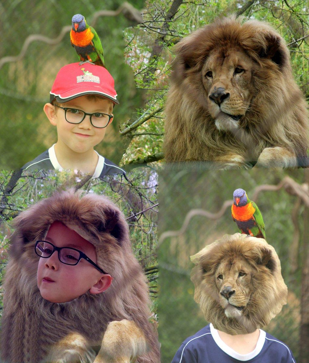 BS-évolution_enfant-lion_en_4_photos.