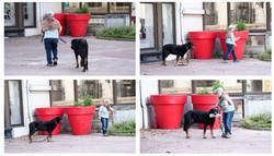 CT-Histoire-4 photos-chiens