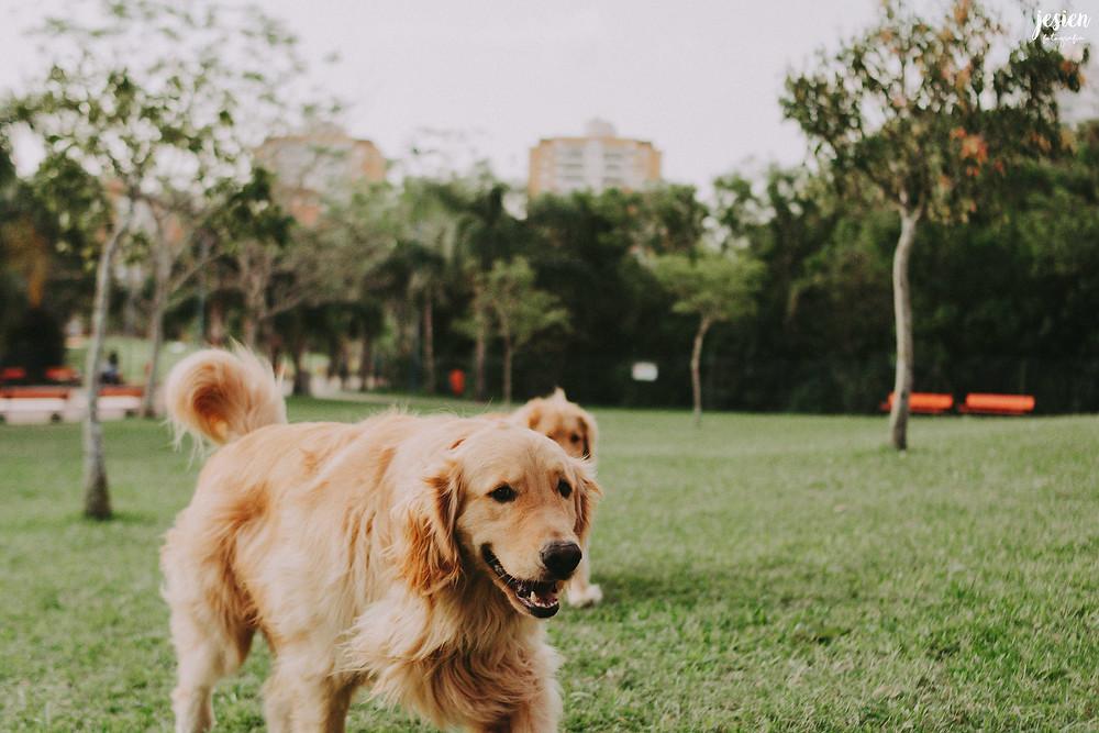 Ensaio Pet Porto Alegre | Fotografia de cachorro Porto Alegre