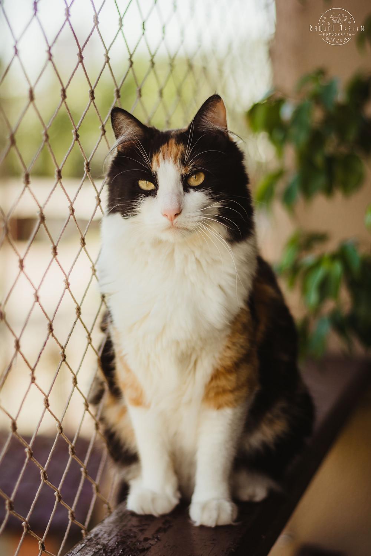 Ensaio Fotográfico Pet Cão e Gato