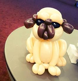 What the Pug!_!_! #puglife #pug #pugs #p