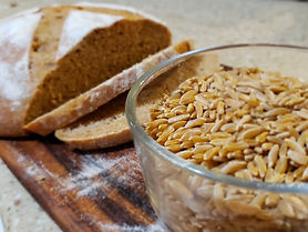 Khorasan Wheat w bread2.jpg